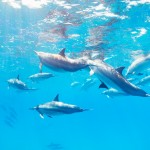 Dolphin swimming tours in oahu